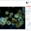 500px をブログ用画像ストレージにするという使い方