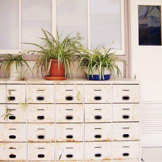 植物図鑑●6|ギャラリー・アビィ
